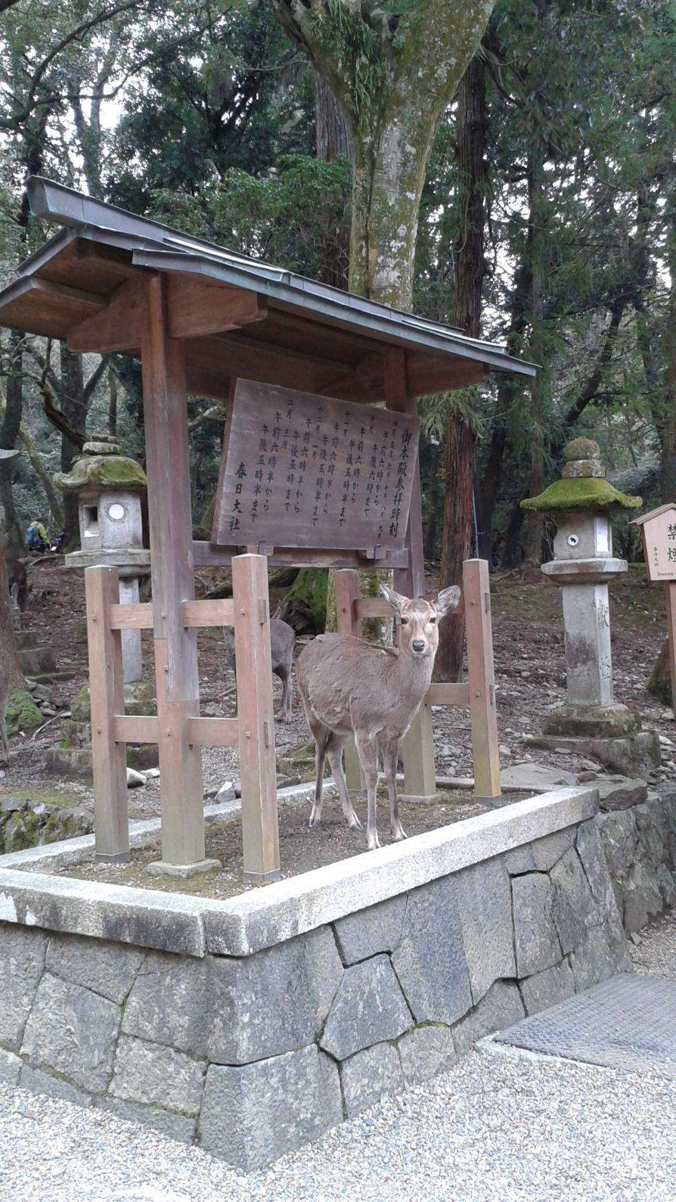 deer in Nara.jpg